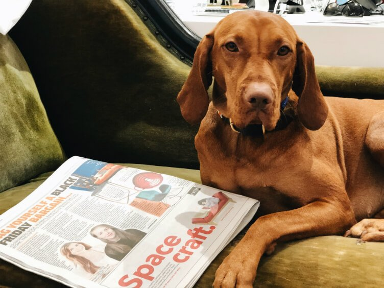 Joy the vizsla - interior designer dog