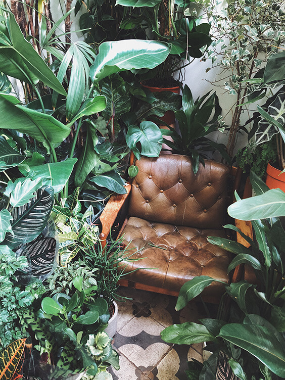 brown leather armchair surrunded by plants