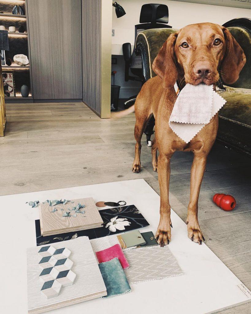 designer dog helps to create mood boards
